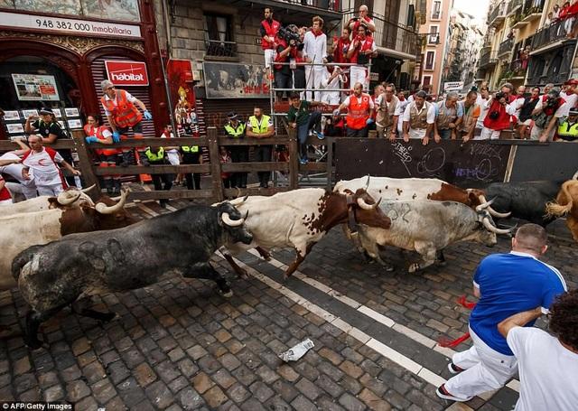 Cả bò tót và người đều dễ dàng bị ngã vì mặt đường lát đá trơn trượt ở những khúc cua.
