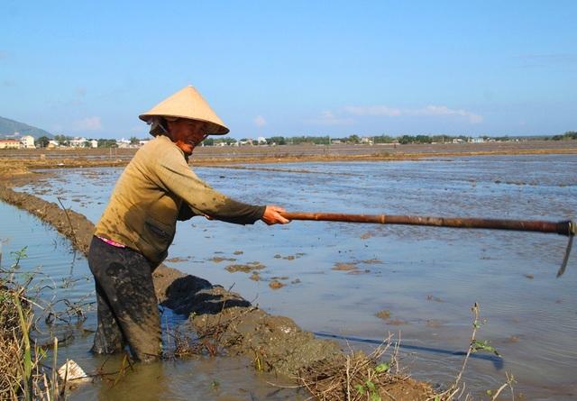 Bà Hoa lo lắng vì đám ruộng nước chưa rút hết nên bà chưa dám ngâm giống