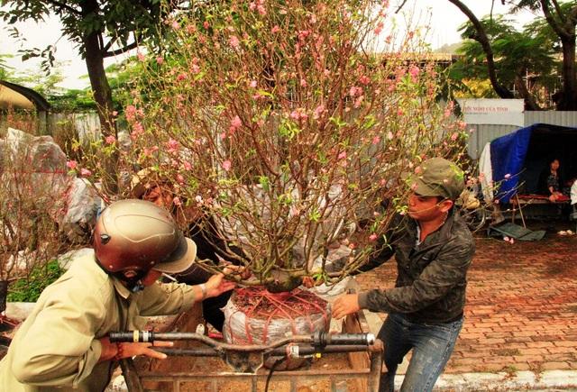 Người dân bắt đầu mua hoa đào chưng Tết