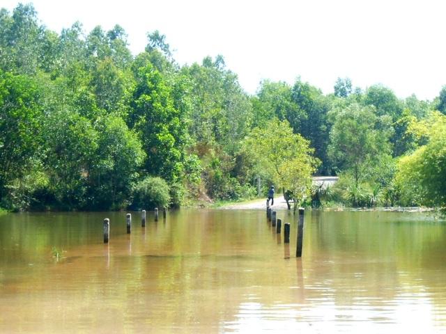 Một số đoạn đường có nước tràn qua bờ, đi ngang nơi đây du khách có thể nhìn thấy những chú cá nhỏ tung tăng bơi lội dưới chân mình