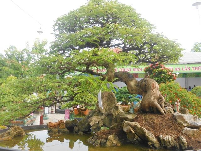 Dịp này Hội An cũng tổ chức liên hoan nghệ thuật sinh vật cảnh để người dân có nơi tham quan, chiêm ngưỡng trong những ngày nghỉ lễ