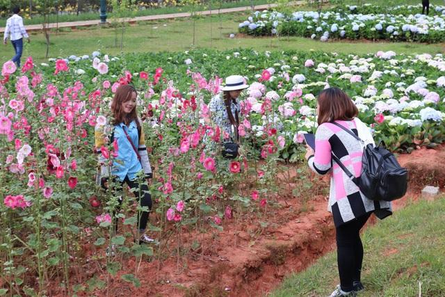 Các bạn gái lưu lại những khoảnh khắc bên hoa tại Đà Lạt