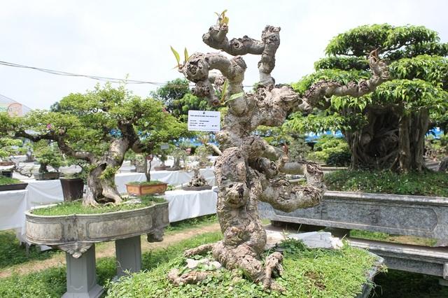 """Tác phẩm """"Cây đại"""" của tác giả Trần Văn Khang. Cây gây ấn tượng bởi thân cây u bướu dáng vẻ cổ kính tự nhiên, không qua sự can thiệp của bàn tay con người."""