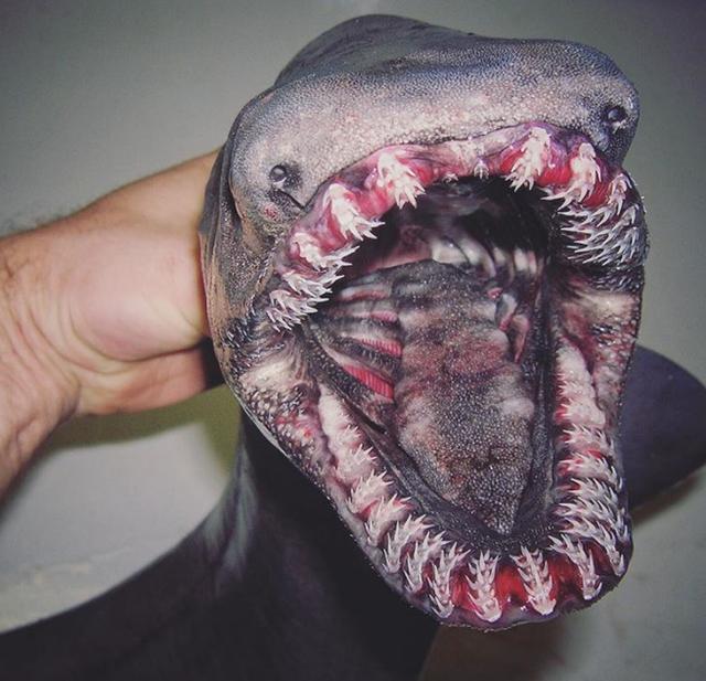 Sinh vật lạ có bộ hàm lởm chởm đáng sợ.