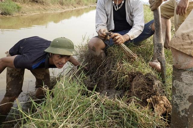 Những người đi bắt chuột cho biết, mỗi buổi có thể bắt được hàng chục kg chuột sống, hôm nào đào hang gặp rắn thì coi như trúng số.