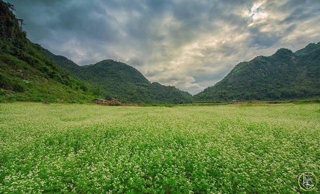 Cánh đồng hoa tam giác mạch ở Lạng Sơn cách Hà Nội khoảng 170km. Ảnh: Thuận Bùi