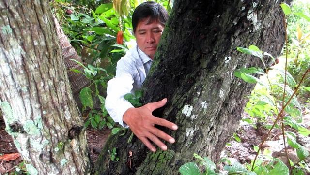 Thân cây xù xỉ, cao khoảng 25m