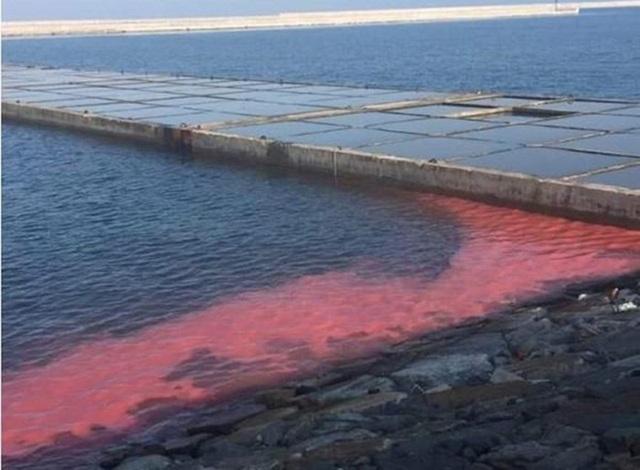 Vệt nước màu đỏ xuất hiện bên trong đê chắn sóng Cảng Sơn Dương của công ty Formosa Hà Tĩnh.