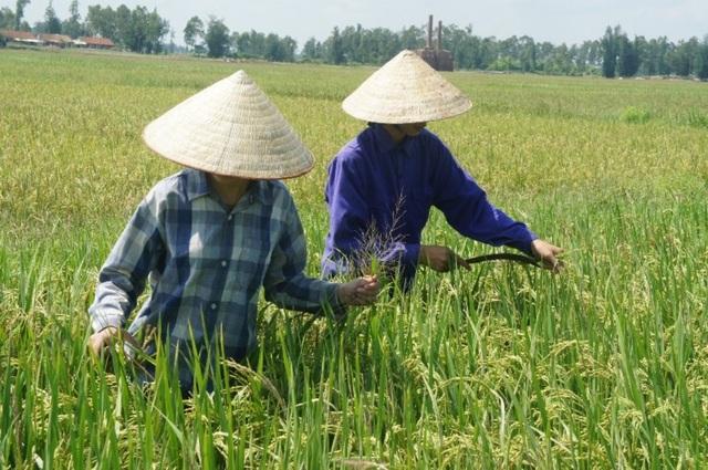 Hai chị em Hoàng và Trang đi làm đồng.