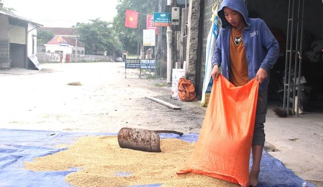 Tranh thủ trời nắng lên, Pháp mang lúa ra phơi. Đây cũng là sản phẩm từ đồng ruộng còn sót lại để anh em Pháp sống qua ngày.
