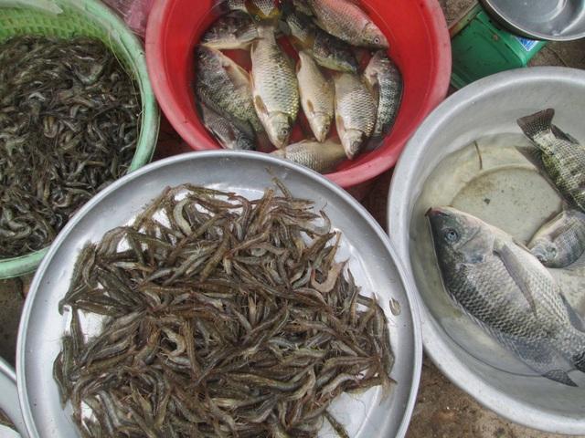 Tôm cá, rau củ quả được người dân đánh bắt, trồng trọt để đem ra bày bán