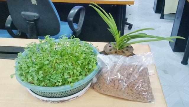 Sản phẩm viên giá thể đất sét nung đã được các bạn thử nghiệm trồng và cho ra sản phẩm