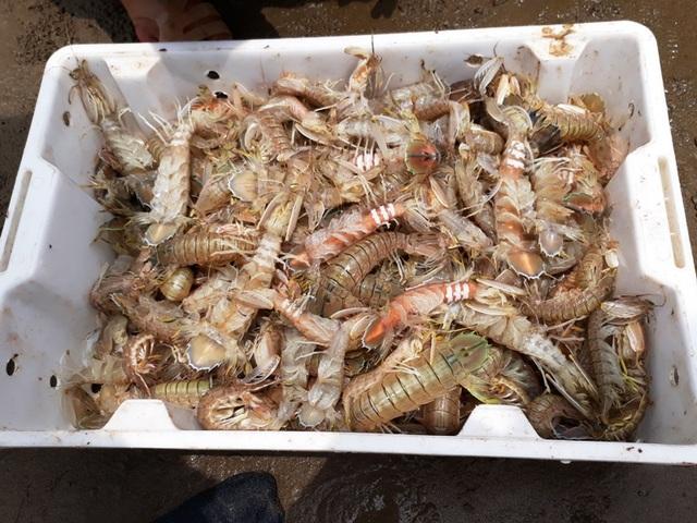 Những mẻ tôm tít tươi sống được bán sau khi đưa lên bờ