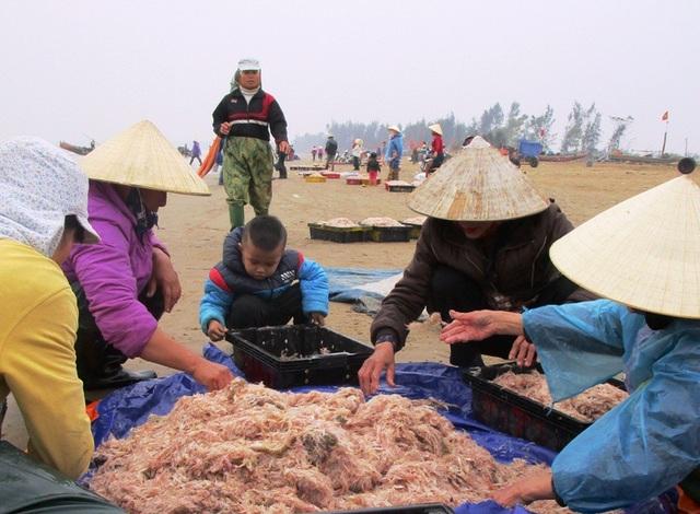 Từ 7 giờ sáng, không khí đã bắt đầu nhộn nhịp trên bãi biển xã Hoằng Trường, huyện Hoằng Hóa khi những bè mảng khai thác moi đã vào bờ.