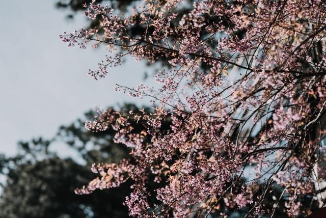 Hình ảnh những cánh hoa tử đằng, hoa mimosa mà Adrian Anh Tuấn và Sơn Đoàn bắt gặp trong những chuyến đi cũng trở thành nguồn cảm hứng sáng tạo cho cả hai.