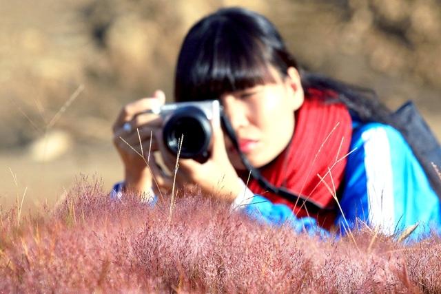 Săn ảnh cỏ hồng