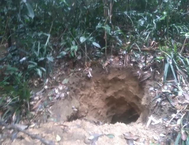 Những hố đất như thế này trong rừng không hiếm