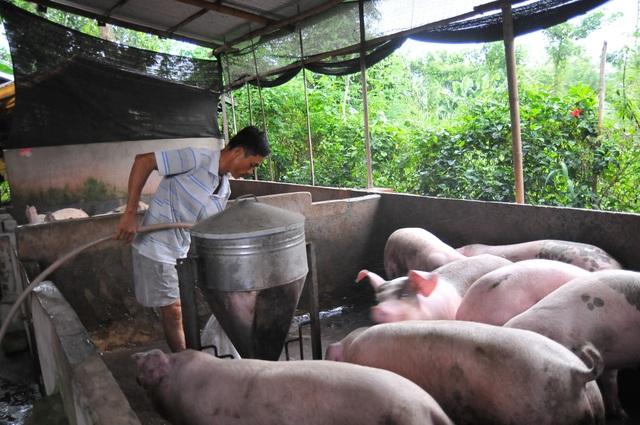 Giá heo hơi tại Đồng Nai, thủ phủ chăn nuôi của cả nước lại rớt thê thảm sau vụ heo bị phát hiện tiêm thuốc an thần tại lò mổ Xuyên Á