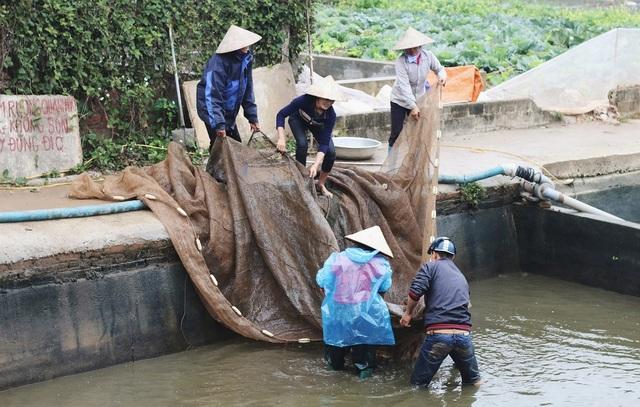 Từ ngày 18 đến ngày 22 tháng Chạp, người dân làng Thuỷ Trầm bắt đầu tất bật thu hoạch cá chép đỏ phục vụ ngày ông Công ông Táo. Làng vốn nổi tiếng bởi nghề truyền thống nuôi cá chép đỏ, được cho là lớn nhất miền Bắc.