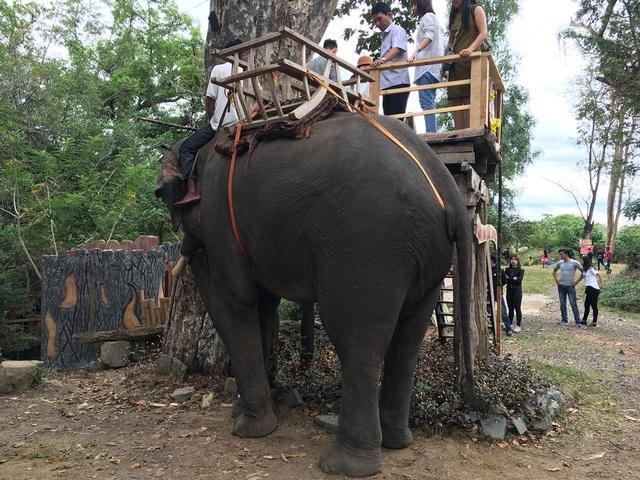 Du khách thích thú với hoạt động cưỡi voi