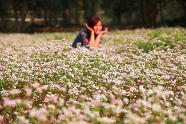 Vườn hoa tam giác mạch trồng ở Thung Nham (Ninh Bình) được lấy giống từ Hà Giang về. Sau hơn 1 tháng trồng đến nay cây phát triển tốt và đã bắt đầy nở rộ hoa.