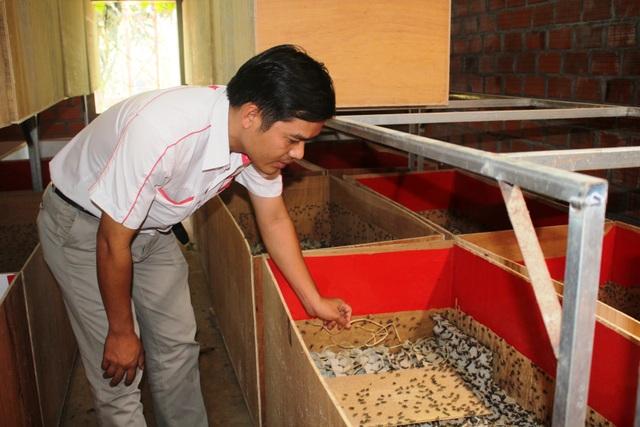 Anh Phạm Duy Phong chăm sóc những chú dế của mình