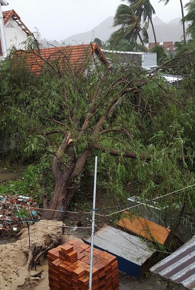 Nha Trang thiệt hại nặng nề nhất trong vòng 20 năm qua - 1