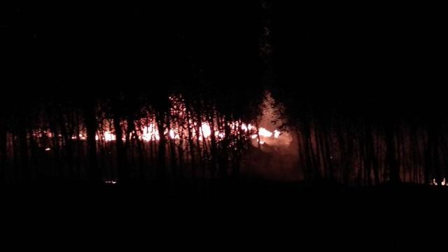Ngọn lửa bốc cháy dữ dội tại xưởng tái chế nhớt nằm giữa vườn tràm