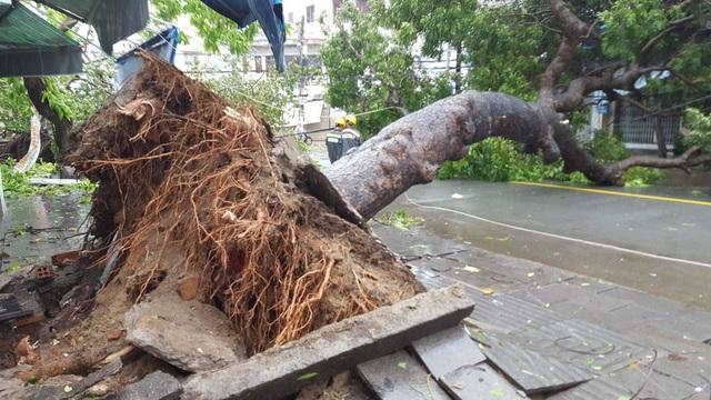 Nha Trang thiệt hại nặng nề nhất trong vòng 20 năm qua - 3