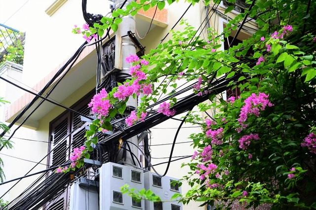Phố phường Hà Nội lãng mạn với những giàn hoa giấy tuyệt đẹp - 5
