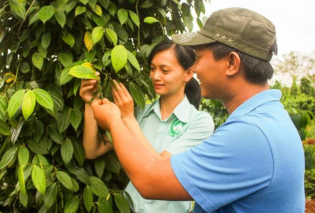 Quá tình sản xuất tiêu hữu cơ luôn được công ty giám sát nhằm cho ra sản phẩm đảm bảo chất lượng nhất