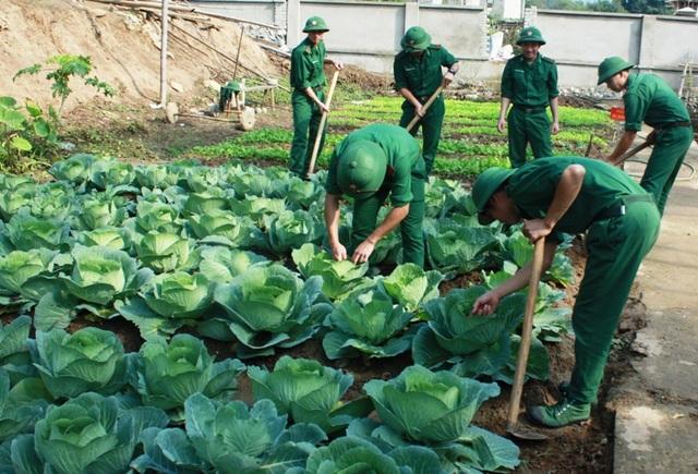 Các chiến sĩ tăng gia sản xuất chuẩn bị rau xanh đón Tết Đinh Dậu 2017