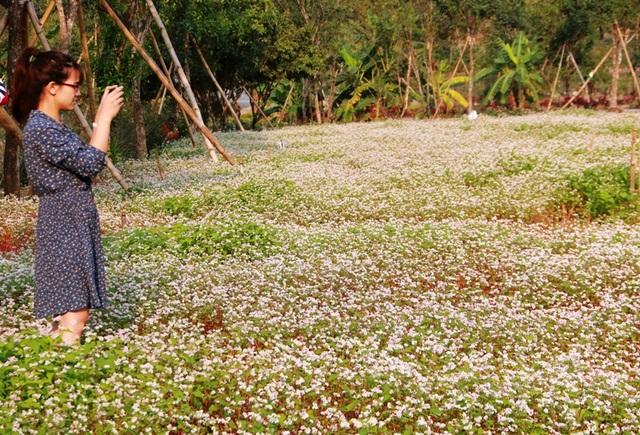 Hoa nở đúng dịp lễ tình nhân 14/2 nên nhiều bạn trẻ đã kéo nhau về đây chiêm ngưỡng vườn hoa đặc biệt...