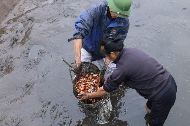 Để có cá cúng lễ cho ngày Tết ông Công ông Táo, người dân bắt đầu nuôi từ cá giống từ hơn nửa năm trước.