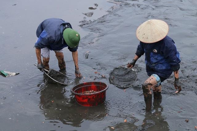 Thông thường cá giống sẽ được tiến hành nuôi từ tháng 6, người nuôi cá chăm sóc sao cho đến khi cá thu hoạch có kích c khoảng 3 ngón tay là vừa đẹp.