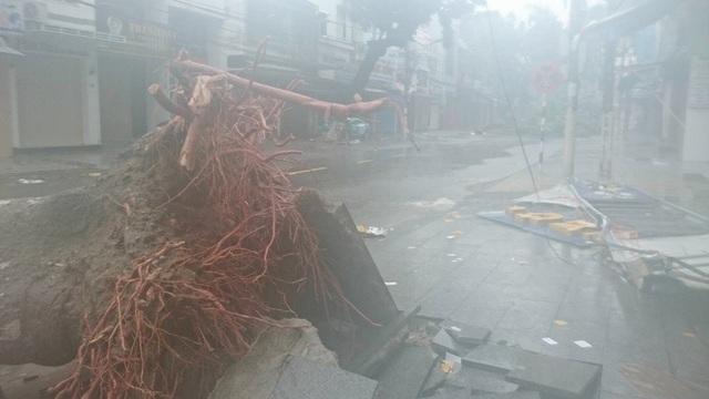 Nha Trang thiệt hại nặng nề nhất trong vòng 20 năm qua - 5
