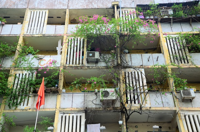 Khung cảnh phố phường trở nên lãng mạn hơn bởi những chùm hoa giấy bung nở rực rỡ