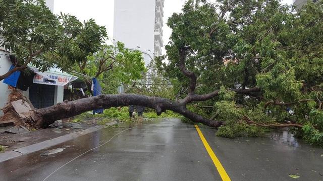 Nha Trang thiệt hại nặng nề nhất trong vòng 20 năm qua - 7
