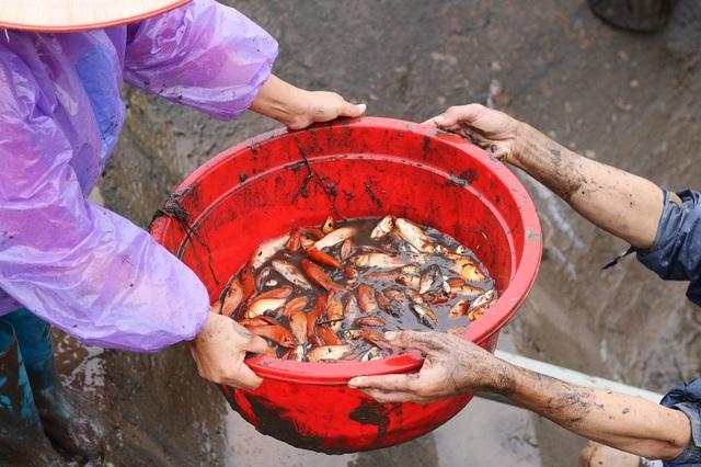Mỗi ao có diện tích trung bình 1 sào (360m2), cho thu hoạch khoảng 30-40kg cá chép đỏ.