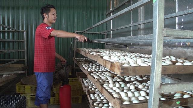 Không dừng lại ở việc chăn nuôi thủ công, anh Cường chịu khó tìm tòi ứng dụng các kỹ thuật công nghệ mới như quy trình nuôi vịt khép kín lấy trứng, hệ thống lò ấp, lò nở vịt con với thức ăn hoàn toàn tự nhiên.