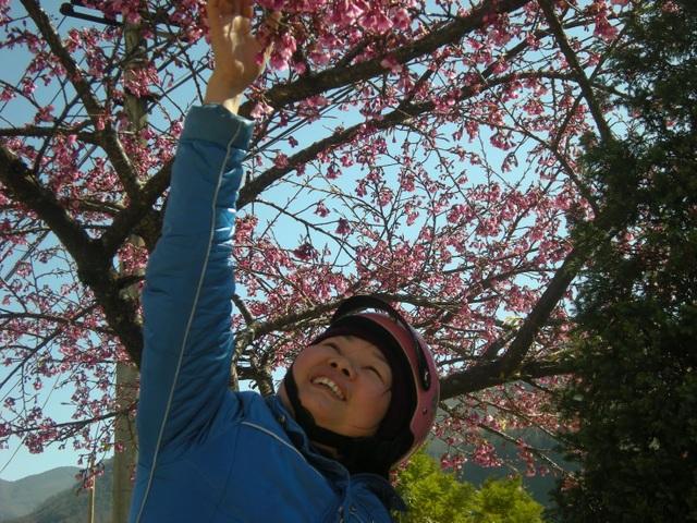 Một người qua đường thích thú dừng lại ngắm hoa.