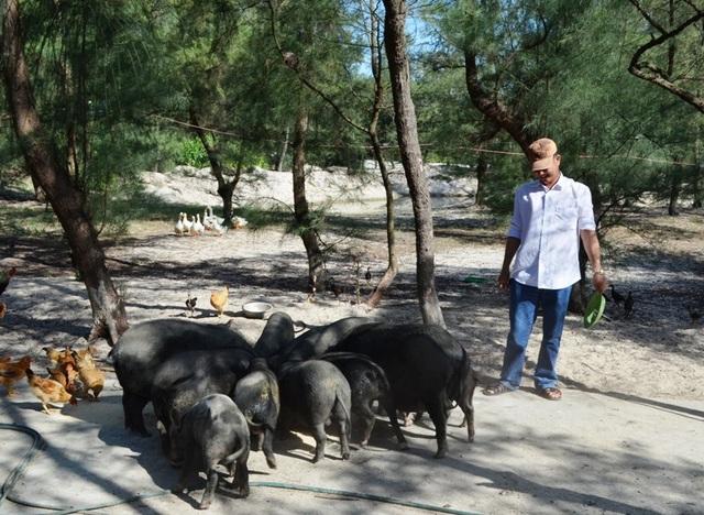 Đàn lợn bản của anh Hoan ở xã Trung Giang bước đầu mang lại hiệu quả