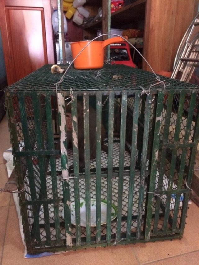 Chú khỉ bị bắt giữ.