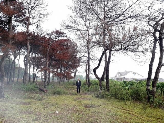 Một phần rừng do Ban quản lý rừng phòng hộ Bắc Biển Hồ quản lý bị chết khô