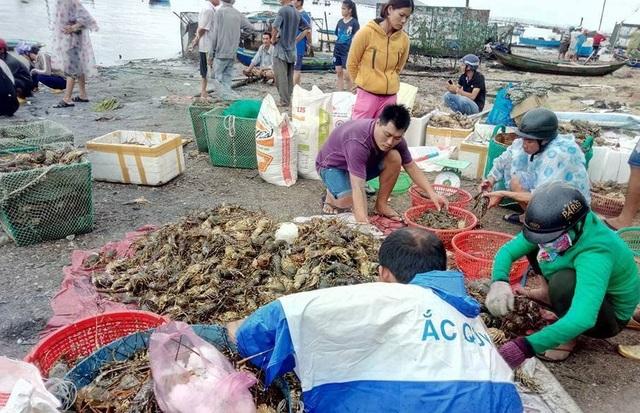 Theo ước tính thì đợt tôm hùm chết hàng loạt này đã cướp đi của người nuôi tôm Phú Yên hơn 400 tỷ đồng.