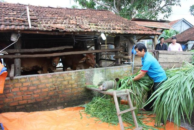 Anh Nhay dùng máy để cắt cây cỏ trồng vỗ béo cho đàn bò