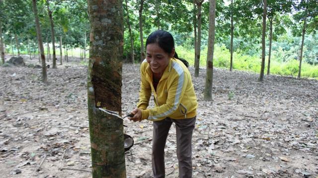 Từ 1 hộ nghèo giờ bà Nguyễn Thị Cước trong tay đã co thu nhập hàng trăm triệu đồng mỗi năm