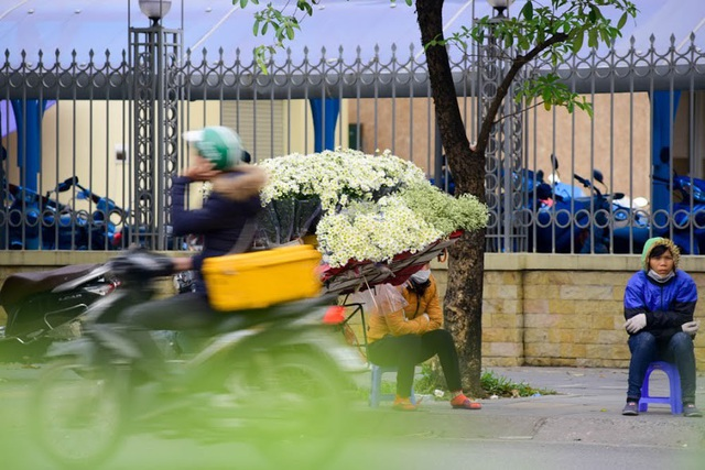 Cúc họa mi thường được bán theo bó và bày bán phổ biến ở những con phố như: Giảng Võ, Nguyễn Chí Thanh, đường Thanh Niên...