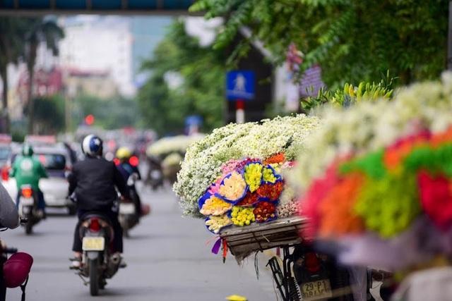 Những chiếc xe chở đầy cúc hoa mi trở thành nét chấm phá không thể thiếu của Hà Nội những ngày đầu đông