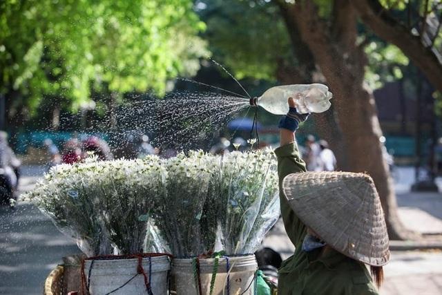 Đối với người Hà Nội, khi những bông cúc họa mi bừng nở trên khắp phố phường cũng chính là khi mùa đông đã về.
